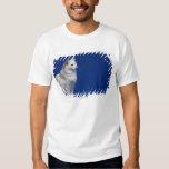 Gato que se sienta contra fondo azul polera