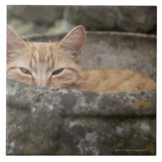 Gato que se sienta dentro de la urna azulejo cuadrado grande