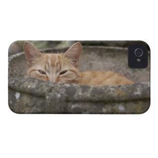 Gato que se sienta dentro de la urna Case-Mate iPhone 4 protectores