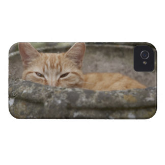 Gato que se sienta dentro de la urna Case-Mate iPhone 4 carcasa