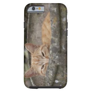 Gato que se sienta dentro de la urna funda de iPhone 6 tough