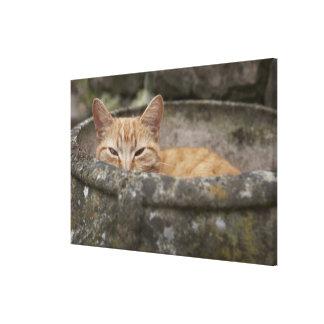 Gato que se sienta dentro de la urna lienzo envuelto para galerias