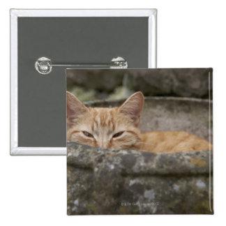 Gato que se sienta dentro de la urna pin cuadrado