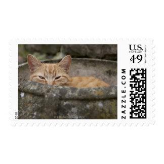 Gato que se sienta dentro de la urna sello postal