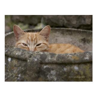 Gato que se sienta dentro de la urna tarjeta postal