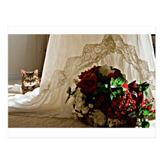 Gato que se sienta detrás de las postales del vest