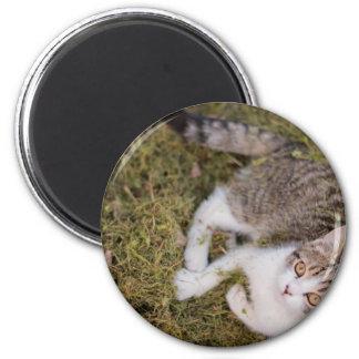 Gato que se sienta en basura del jardín imán redondo 5 cm