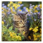 Gato que se sienta en jardín de flores tejas  cerámicas