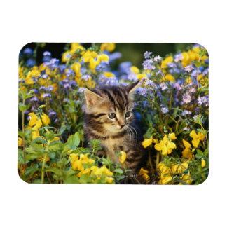 Gato que se sienta en jardín de flores imán foto rectangular