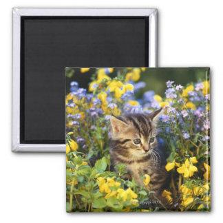 Gato que se sienta en jardín de flores imán cuadrado
