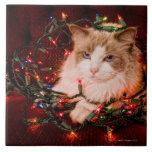 Gato que se sienta en una bola de las luces de nav azulejo cerámica
