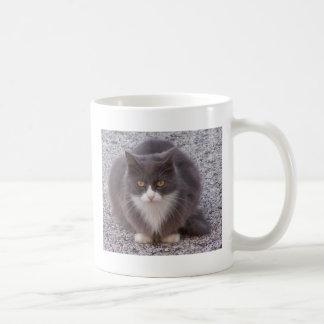 Gato que se sienta taza