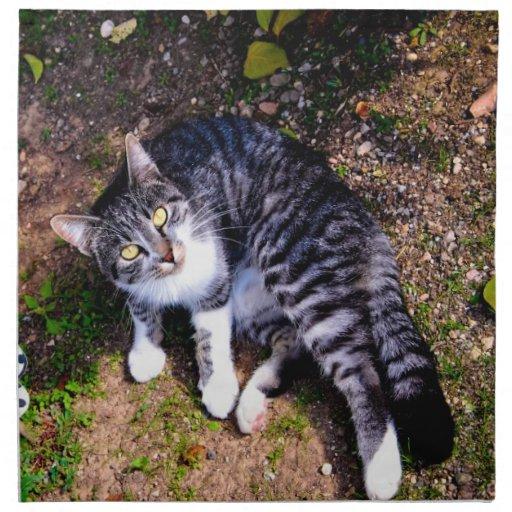 Gato rayado blanco y negro servilletas imprimidas