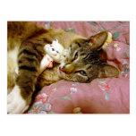 Gato real, gato falso postales