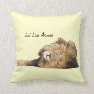 Gato realmente grande apenas león alrededor almohada