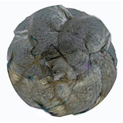 Gato redondo - ornamento adorno fotoescultura