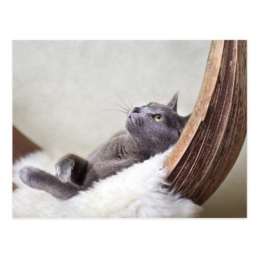 Gato relajado tarjetas postales
