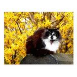 Gato rodeado por las floraciones amarillas del postal