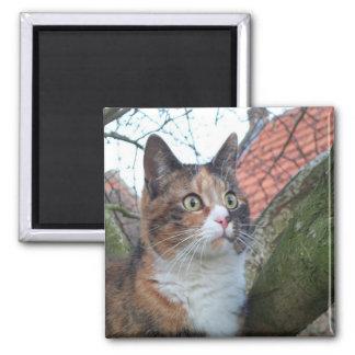 """Gato """"rojo"""" con los ojos grandes imán cuadrado"""