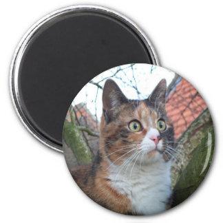 """Gato """"rojo"""" con los ojos grandes imán redondo 5 cm"""