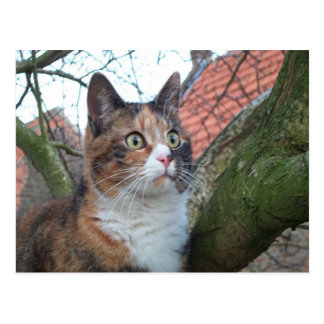 """Gato """"rojo"""" con los ojos grandes postales"""