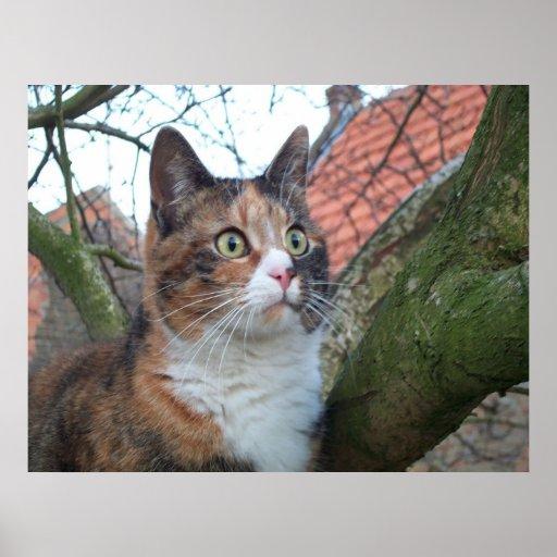 """Gato """"rojo"""" con los ojos grandes posters"""