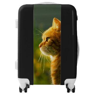 Gato rojo lindo maletas