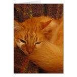 ¿Gato rojo soñoliento - usted finalmente déjeme do Felicitacion