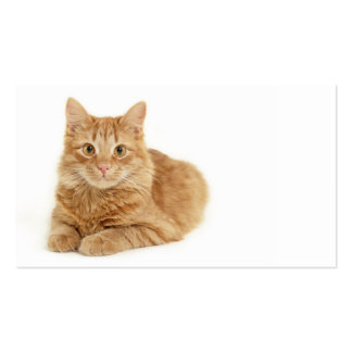 Gato rojo tarjeta personal