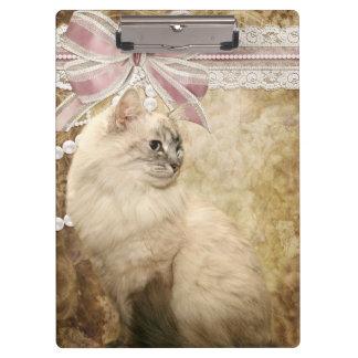 Gato romántico hermoso del gatito