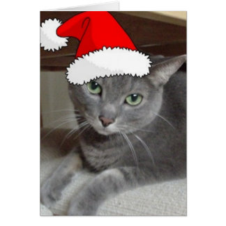 Gato ruso del gris azul del navidad tarjeta de felicitación