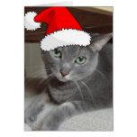 Gato ruso del gris azul del navidad tarjetas