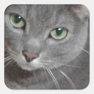 Gato ruso del gris azul pegatinas cuadradases personalizadas