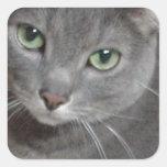 Gato ruso del gris azul pegatina cuadrada