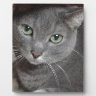 Gato ruso del gris azul placas con foto