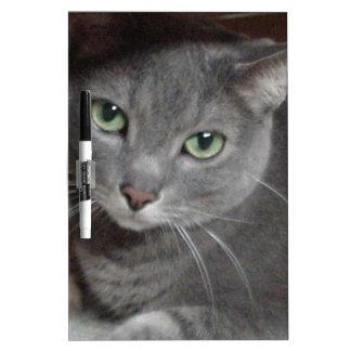 Gato ruso del gris azul tableros blancos