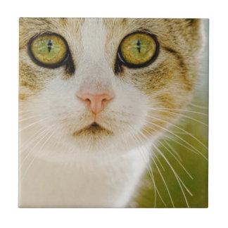 Gato salvaje con Eyeliner Teja