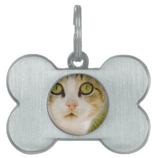 Gato salvaje con Eyeliner Placa Mascota