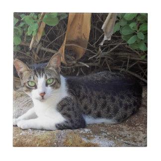 Gato salvaje de Hawaii de la bahía de Hanauma Azulejos Ceramicos