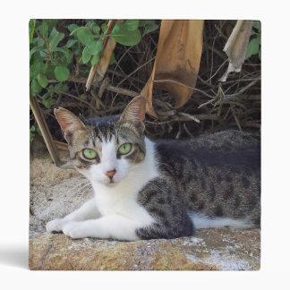 Gato salvaje de Hawaii de la bahía de Hanauma