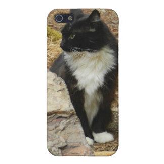 Gato salvaje dulce del smoking iPhone 5 fundas