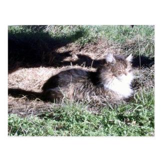 Gato salvaje en postal de la luz del sol