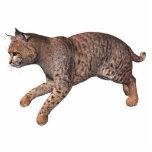 gato salvaje esculturas fotográficas