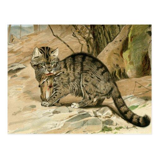 Gato salvaje postal