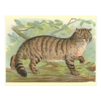 Gato salvaje postales