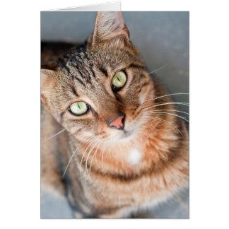 Gato salvaje que mira para arriba - la TARJETA