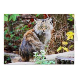 Gato salvaje que se sienta en tarjeta de maderas