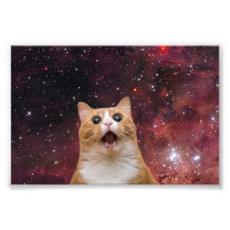 gato scaredy en espacio cojinete