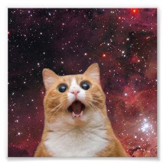 gato scaredy en espacio fotografía