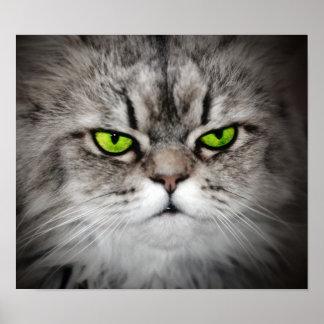 Gato serio con los ojos verdes póster